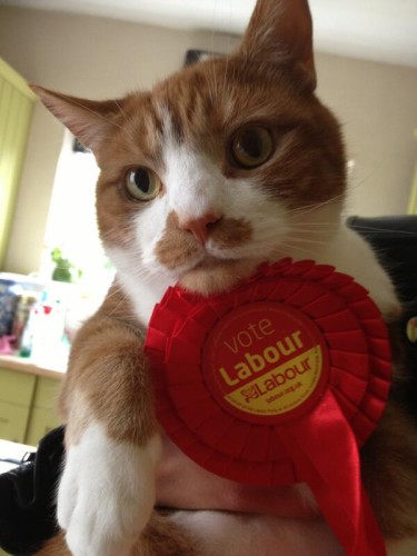 cat voting Labour
